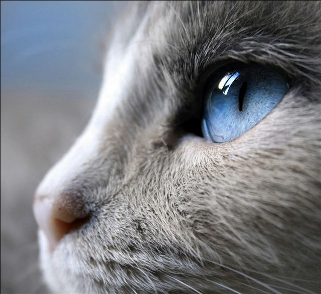 猫の横顔瞳のアップ