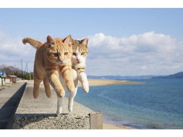 ジャンプした猫【飛び猫】がかわいすぎる♡なんと写真集も出ちゃうほど盛り上がってます♪ | GIRLY